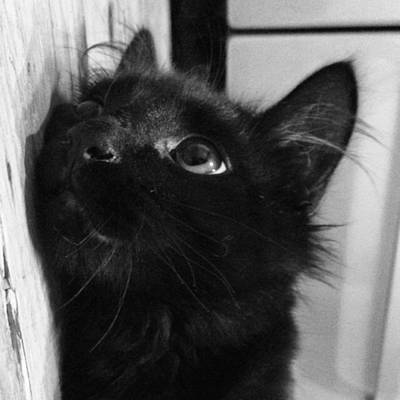 Elvis Photograph - He's Just Too Cute #elvis #my #kitten by Courtney Peterson