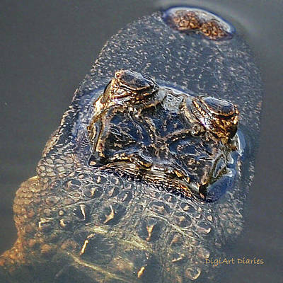 Crocodile Digital Art - Hes Watching You by DigiArt Diaries by Vicky B Fuller