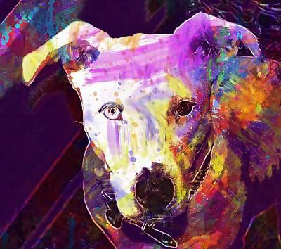 Heterochromia Dog White Pittbull  Art Print