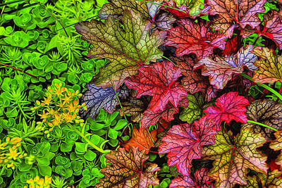 Photograph - Heuchera And Sedum by Dennis Lundell