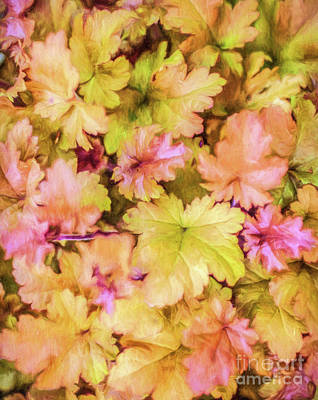 Digital Art - Heuchera Marmalade by Liz Leyden