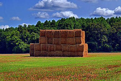 Photograph - Hey Hay by Bill Swartwout Fine Art Photography