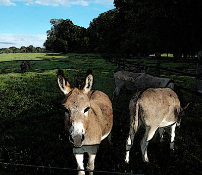 Donkey Digital Art - Hey There by Susan  Esbensen