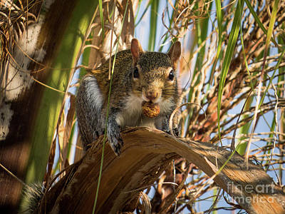 Squirrel Photograph - Hi Cutie by Zina Stromberg