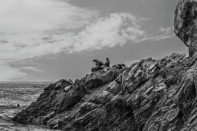 Photograph - Relaxing Bw by Robert Hebert