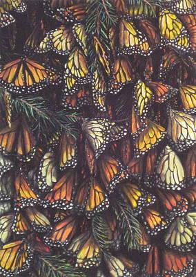Hibernating Monarchs Art Print by Sam Pearson