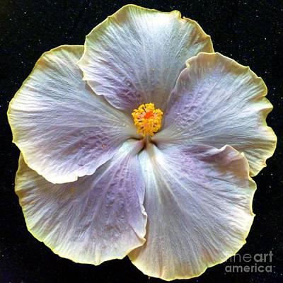Photograph - Hibiscus 11 by Barbie Corbett-Newmin