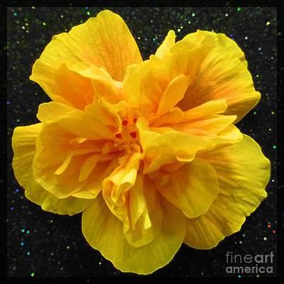 Photograph - Hibiscus 12 by Barbie Corbett-Newmin