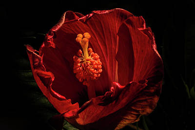 Photograph - Hibiscus 2 by Jay Stockhaus