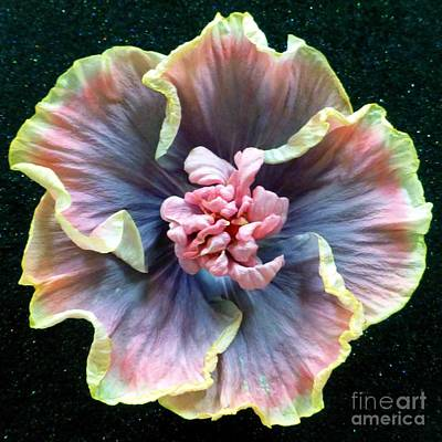 Photograph - Hibiscus 9 by Barbie Corbett-Newmin