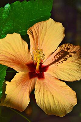 Passiflora Digital Art - Hibiscus. by Andy Za