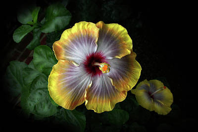 Photograph - Hibiscus by Ann Lauwers