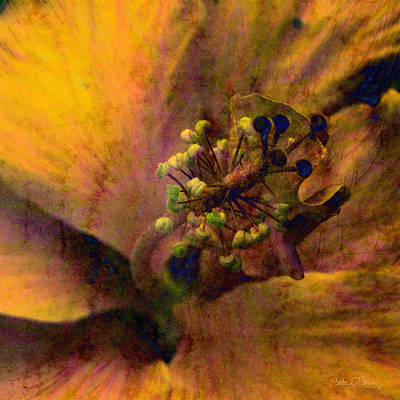 Digital Art - Hibiscus by Barbara Berney