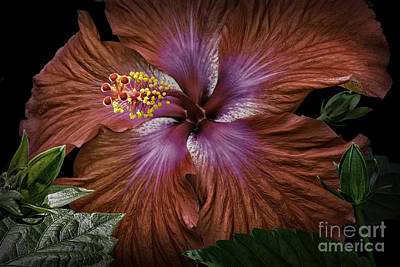 Photograph - Hibiscus Beauty by Walt Foegelle