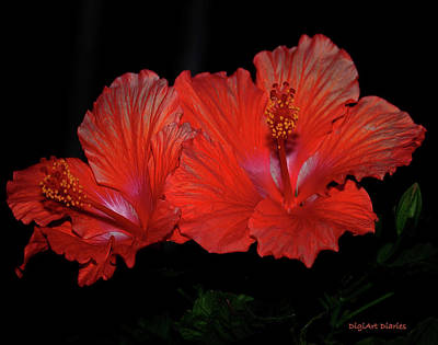 Digital Art - Hibiscus Blooms Aglow by DigiArt Diaries by Vicky B Fuller