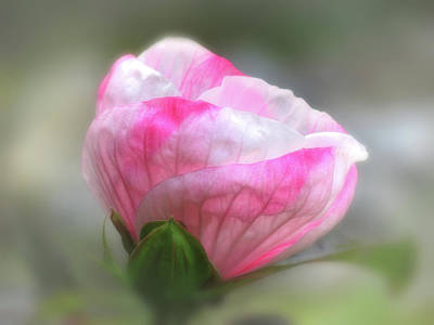 Photograph - Hibiscus Blur by MTBobbins Photography