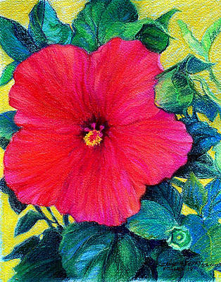 Pastel - Hibiscus Bright by Suzanne Berry