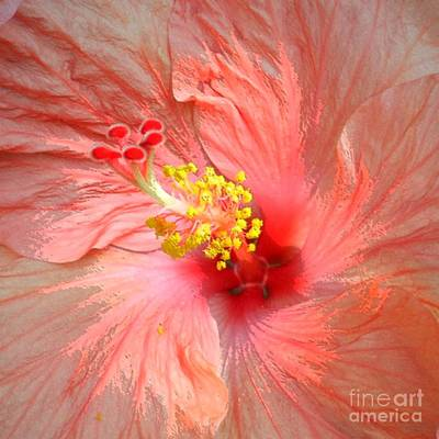 Photograph - Hibiscus Central by Barbie Corbett-Newmin