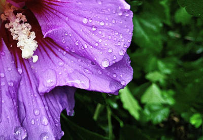 Photograph - Hibiscus Corner by Robert Knight
