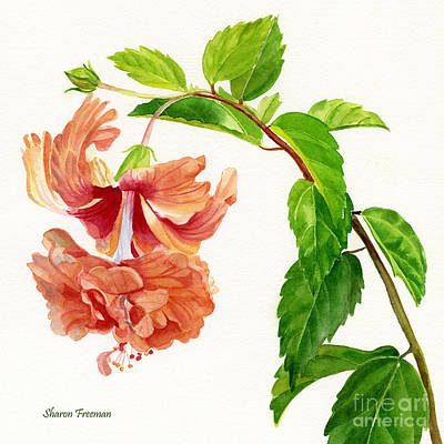 Hibiscus El Capitolio Square Design Art Print by Sharon Freeman