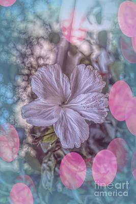 Photograph - Hibiscus by Elaine Teague