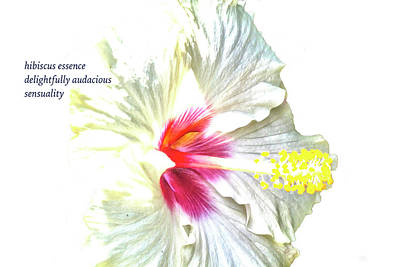 Photograph - Hibiscus Essence Haiku  by Constantine Gregory