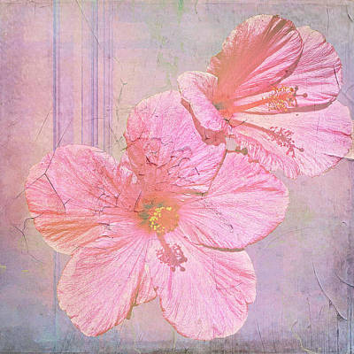 Photograph - Hibiscus Faded by Larry Bishop
