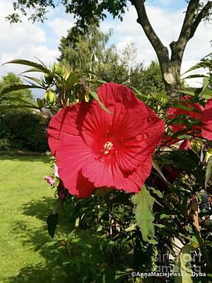 Photograph - Hibiscus Flower by Anna Folkartanna Maciejewska-Dyba