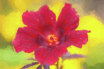Photograph - Hibiscus Flower Bloom Malvaceae 001 by Rich Franco