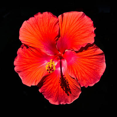 Photograph - Hibiscus Flower by Kenneth Cole