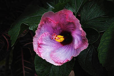 Red Bud Photograph - Hibiscus Flower by Tom Mc Nemar