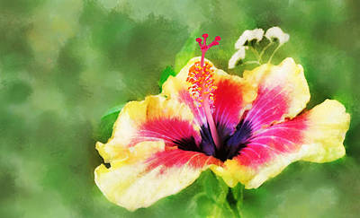 Digital Art - Hibiscus by Francesa Miller