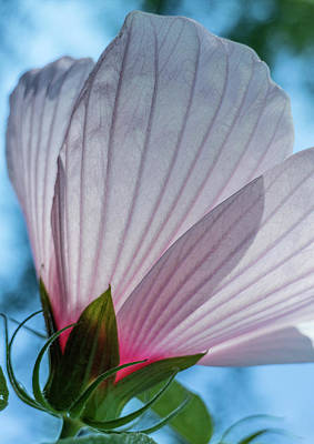 Photograph - Hibiscus by Garry McMichael