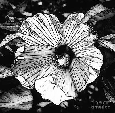 Photograph - Hibiscus In Black And White by Luther Fine Art