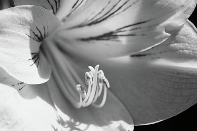 Photograph - Hibiscus In Black N White by Florene Welebny