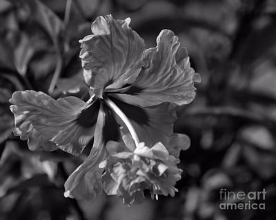 Art Print featuring the photograph Hibiscus In Blackwhite by Ken Frischkorn