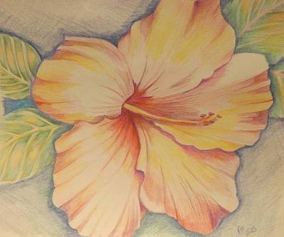 Painting - Hibiscus In Pencil by Pamela Anderson