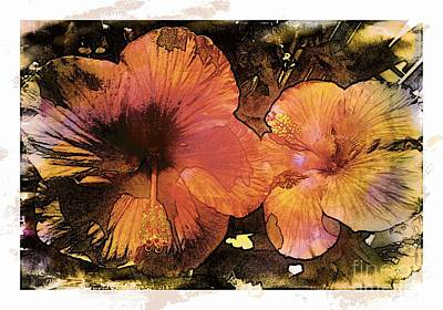 Photograph - Hibiscus In Sunlight by Barbara Griffin