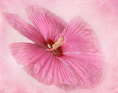 Photograph - Hibiscus In The Pink				 by David and Carol Kelly