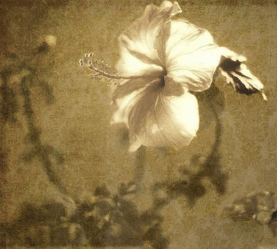 Photograph - Hibiscus Light by Kathy Bassett