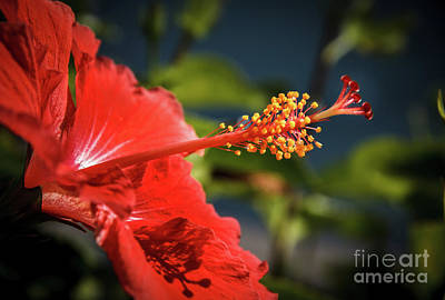 Photograph - Hibiscus Macro by Robert Bales
