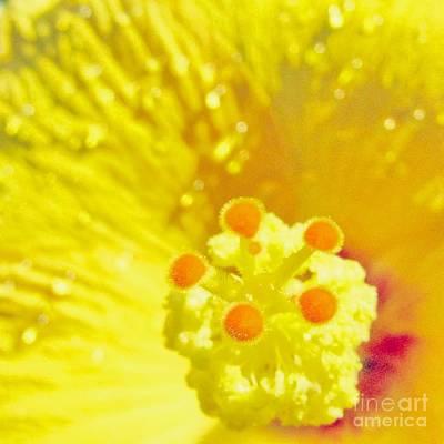 Hawaii Photograph - Hibiscus by MingTa Li