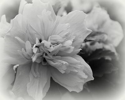 Photograph - Hibiscus Mutabilis II - Bw by Beth Vincent