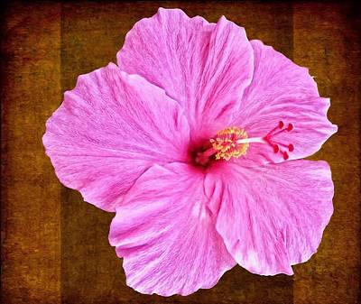 Photograph - Hibiscus Pink On Browns by Alice Gipson