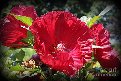 Photograph - Hibiscus Radiant In Red by Dora Sofia Caputo Photographic Design and Fine Art
