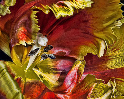 Hibiscus Spice Art Print