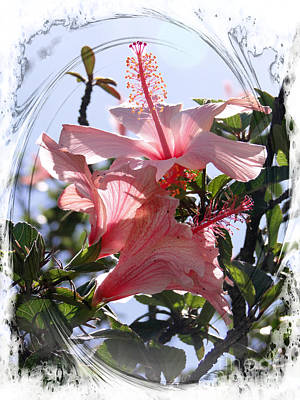 Photograph - Hibiscus Splendour II by Al Bourassa