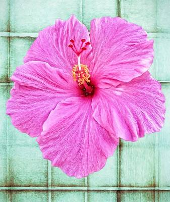 Photograph - Hibiscus Squares by Alice Gipson