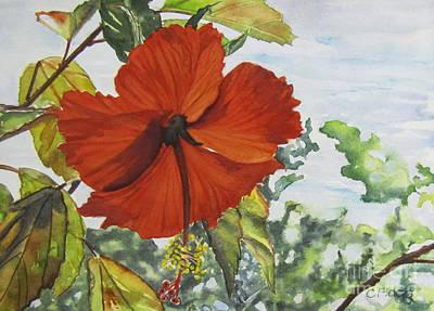 Hibiscus St Thomas Art Print