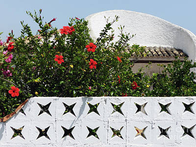 Photograph - Hibiscus Wall - Andalucia by Phil Banks